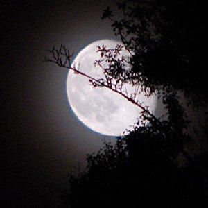 Bonne Nuit Ma Chérie Blog De X Philippe