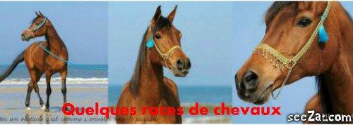 Voici quelque races de chevaux