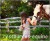 ressources-equine