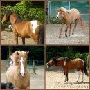 Photo de Favorites-Ponys