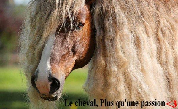Le cheval ! Plus qu'une passion <3