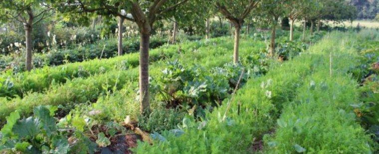 La permaculture : c'est quoi ?