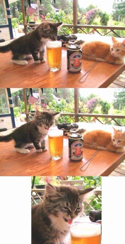 Découverte de l'alcool