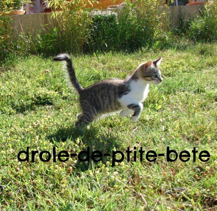 une vie de.... chat