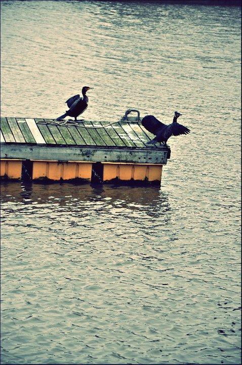 [ Quarante-neuf. ]   Take me to the water - Nina Simone.