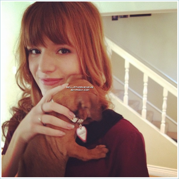 Interview de Bella & Zen pour KTLA + Bella a adopté une chiotte + vote + new photoshoot SIU
