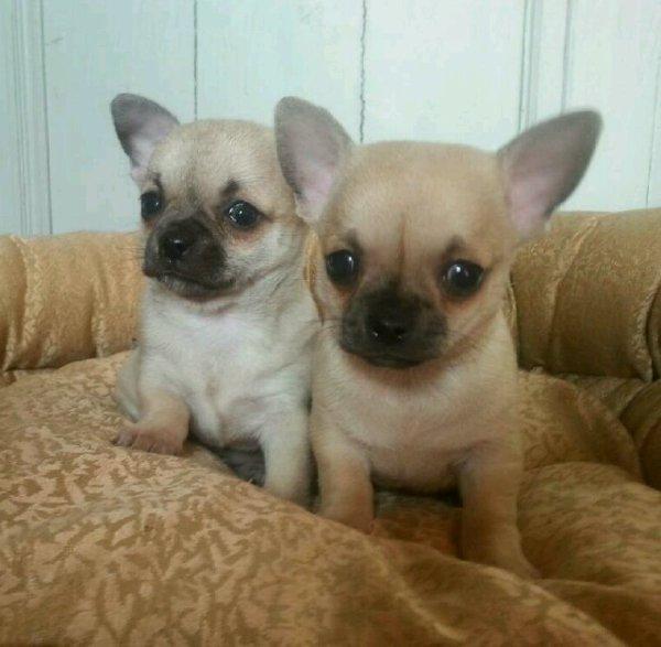Les jumeaux...