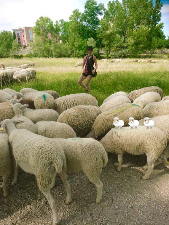 Saute moutons...
