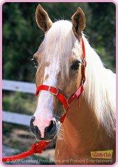 Blog de grand galop 22 page 6 vive grand galop - Grand galop le cheval volant ...