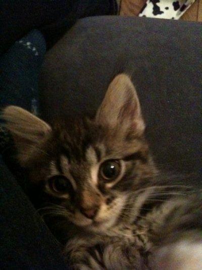 Mon 1er chat Scarlett