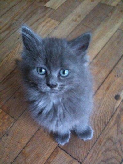 Mon 2e chat Roméo