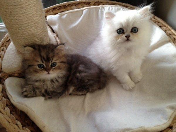 Mes bébés 7 semaines
