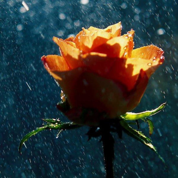 Pluie de printemps