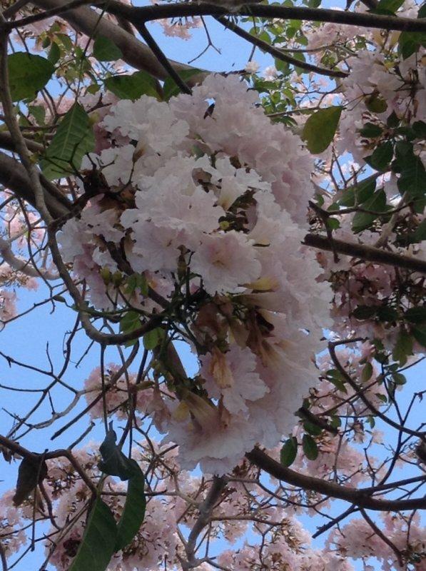 Ode à l'art floral