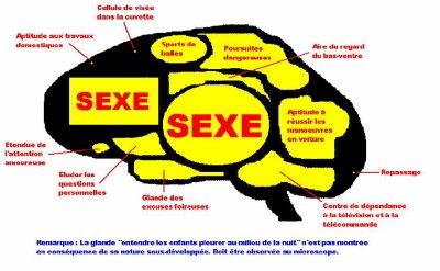 cerveau d'un homme
