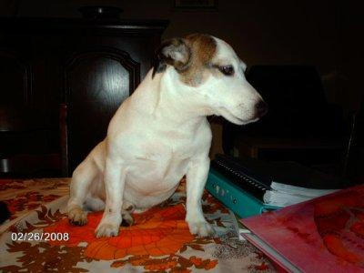 ben voilà mon petit jack malheureusement il est mort il y a quelques années mais ainsi je garde une trace de lui.