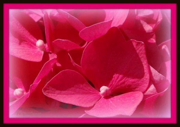 En croyant à des fleurs, souvent on les fait naître.