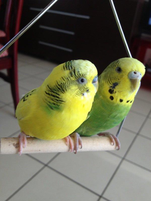 Mon couple