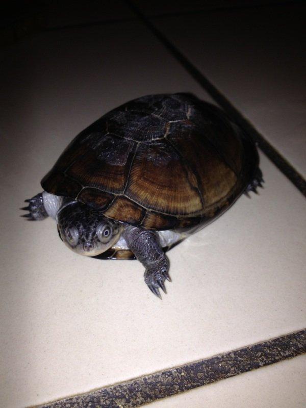 Petit coucou chez mes tortues