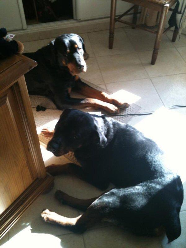 mes chiens Athos et Era mes bb