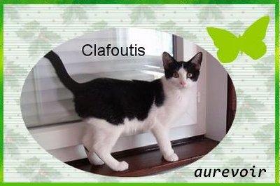 Aurevoir mon Clafoutis :'(