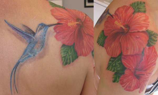 colibri & hibiscus