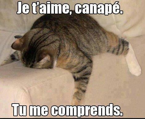 Drôle de chat.♥