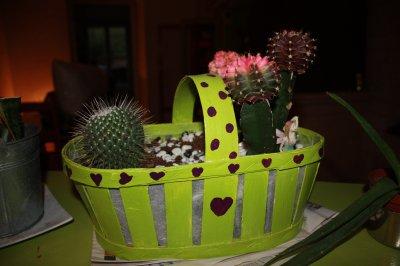 Compos de cactus