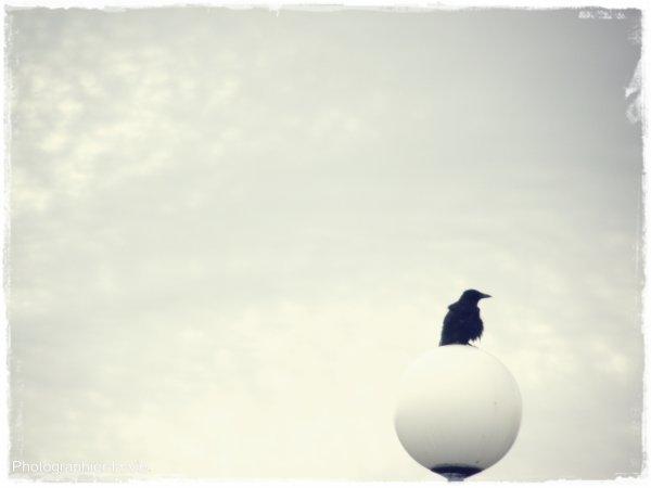 """""""L'amour ne se conclut pas, comme un marché. L'amour, c'est un oiseau. Imprévisible, fantasque. Fragile aussi, et périssable. Et cet oiseau, pourtant, d'un seul battement d'ailes, allège nos existences de tout le poids de l'absurdité."""" - L . Maheux-Forcier."""