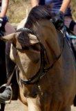 Photo de Vente-Horse-Matos