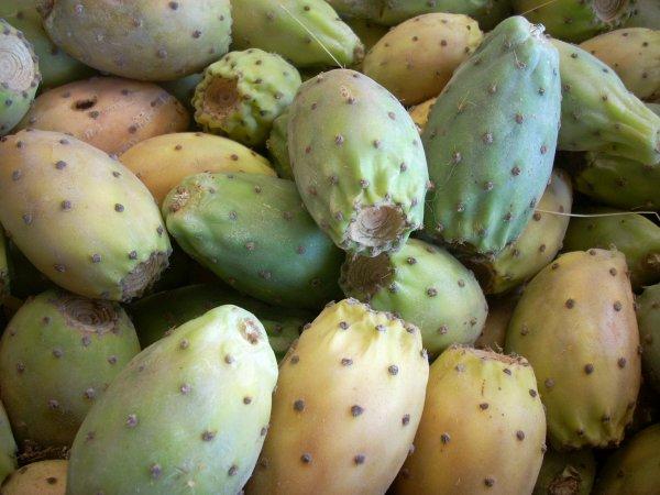 cactus  rhamna...slokh..