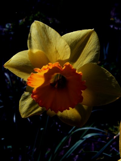 Fleur de la renommée, fleur de la gloire, fleur qui se fane sur-le-champ.