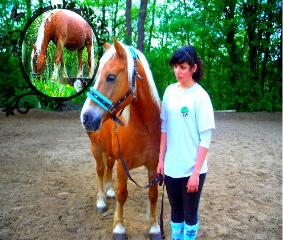 Portrait     Equin   ☼