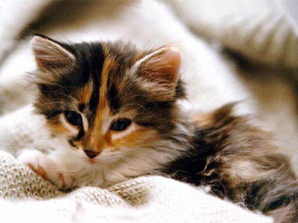 les chaton (je les kiffff)