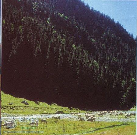 Mount Tianshan