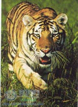 Preface of Rare Wild Animals