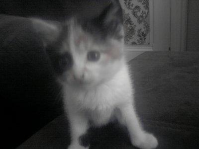 Mon Ancien Chat , Caramel