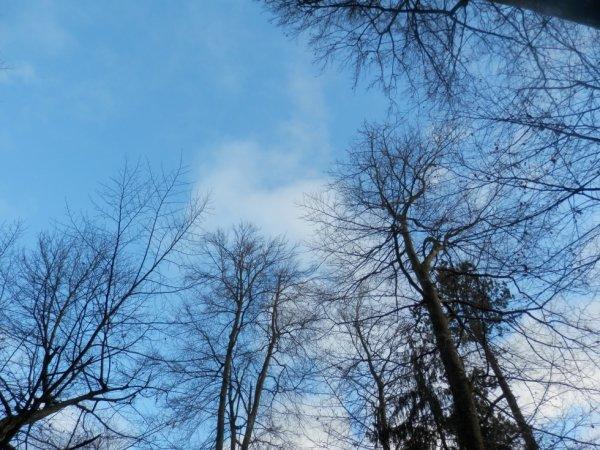 Regarder le ciel, et penser.♥