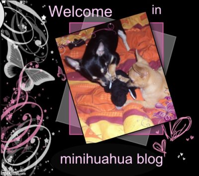 Welcome in my blog ^^  >>> ADD ME <<<