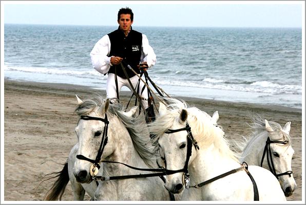 » Lance ton coeur par dessus l'obstacle et ton cheval suivra ❤.