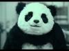 ne dite jamais non à un panda