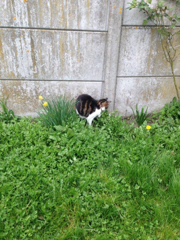 notre jardin et mo chat