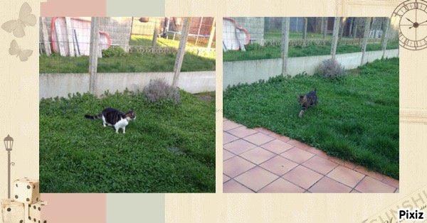 mes 2 chats dans  mon jardin