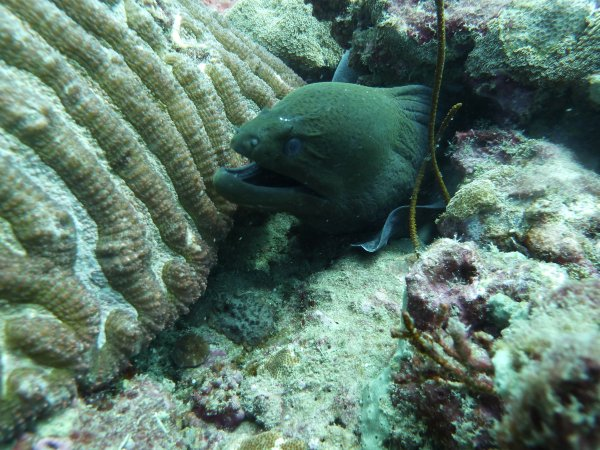 December 2016 Diving in Phuket area and Similans national park.