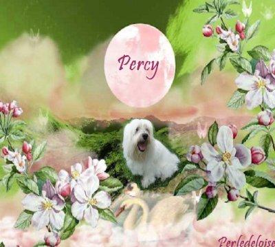 A mon ami Percy!