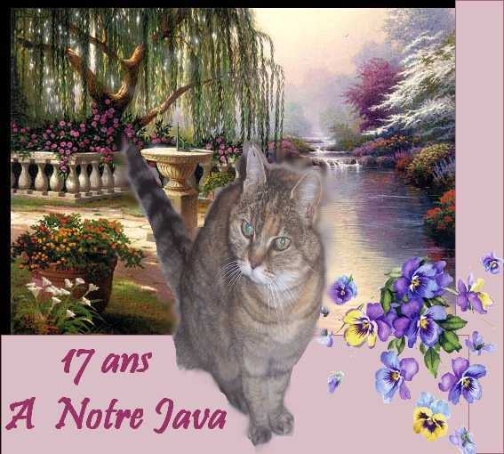 Hommage a notre Java