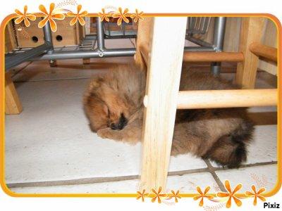 Elle adore  cet endroit pour dormir !!!