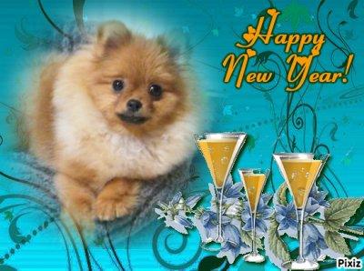 Bonne année 2011 à tous !!!