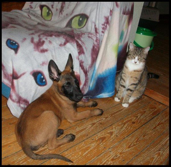 mes copaines les chats