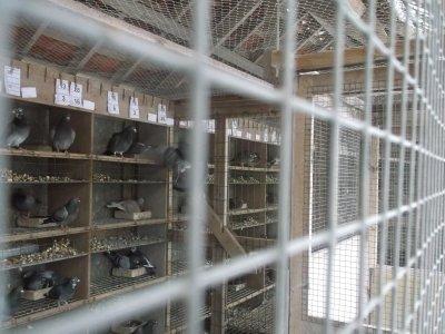 les pigeon station natural